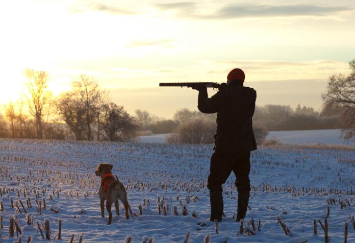 Po čijem nalogu lovci ubijaju pse lutalice u Tuzlanskom kantonu