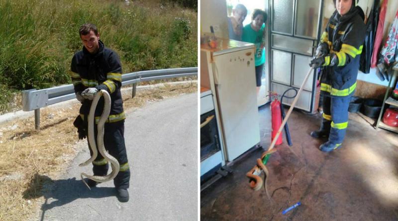 Vatrogasac uhvatio jednu od najvećih zmija na Balkanu