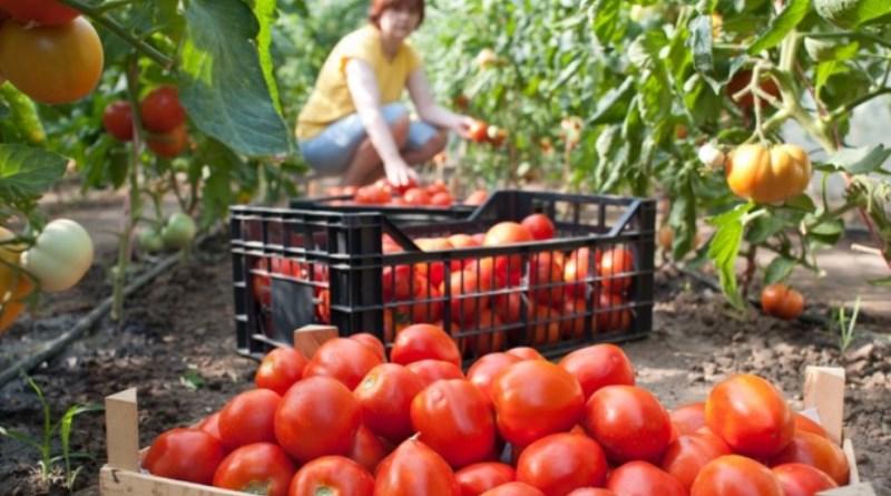Poljoprivrednici iz Tuzle obavezni su prijaviti proizvodnju do 31. marta 2018. godina