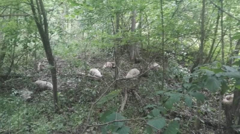 Demineri FUCZ kod Gračanice izvadili ostatke mine radi istražne radnje