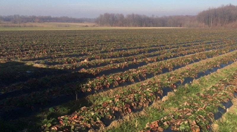 Obavještenje za poljoprivredne proizvođače sa područja Kalesije