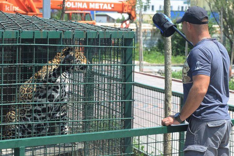 Sabriji Ramiću afrički lav je vjeran drug: Tuma je velika maza, jede mi iz ruke