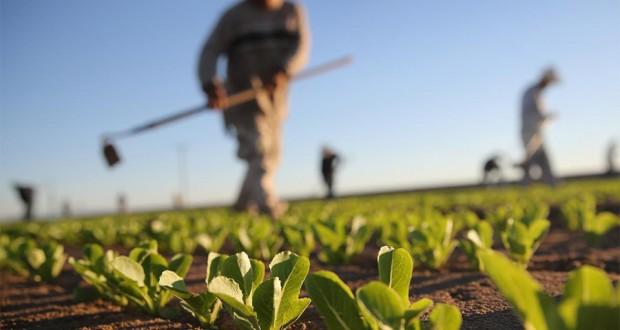 Oko 750 000 KM za projekte iz oblasti primarne poljoprivrede