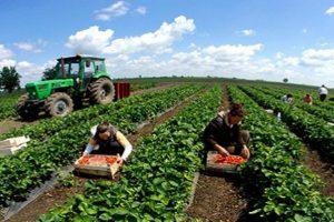 Vanredna sjednica Vlade TK: Za poljoprivrednu i ruralni razvoj izdvojeno 4,1 milion KM