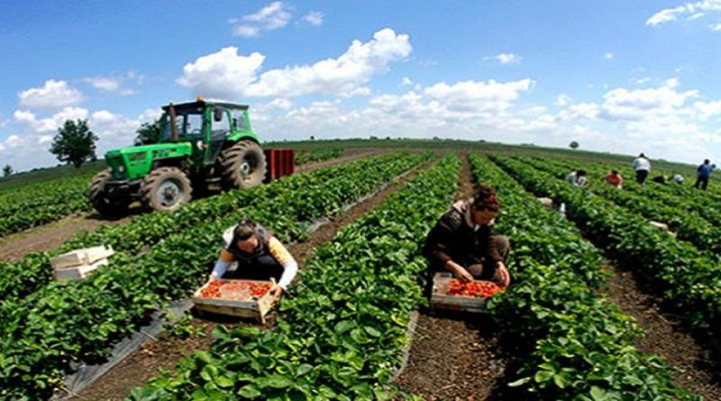 Poljoprivrednici iz TK ostvarili pravo na 15,6 miliona KM poticaja
