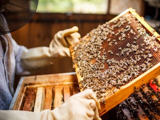 Pčelari u FBiH dobili jedinstveni Registar pčelara i pčelinjaka