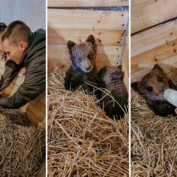 BINGO ZOO: Medvjedići iz Kreševa stigli u novi dom