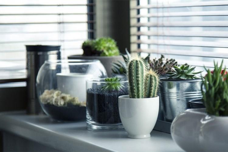 Biljke koje će podići kvalitet vazduha u vašem domu