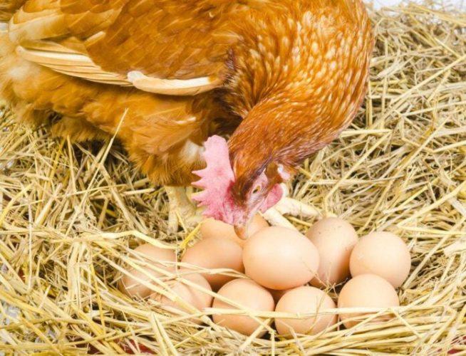 BiH bi mogla ostati bez dozvole za izvoz industrijskih jaja i pilećeg mesa u EU