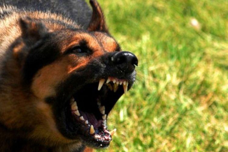 """Starca izujedali psi, komšije ga spasile: """"Bilo je strašno to gledati"""""""