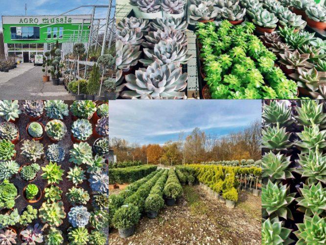 AGRO MUSALA: Od ideje do izrade rješenja za najljepše uređen vrt