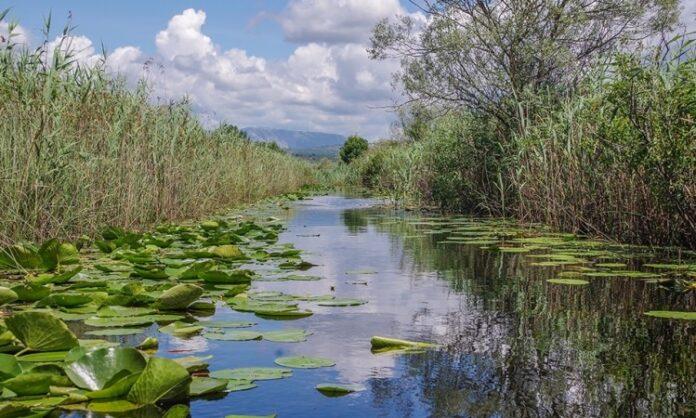 WWF: Očuvati izvore slatke vode kako bi u budućnosti voda bila dostupna svima