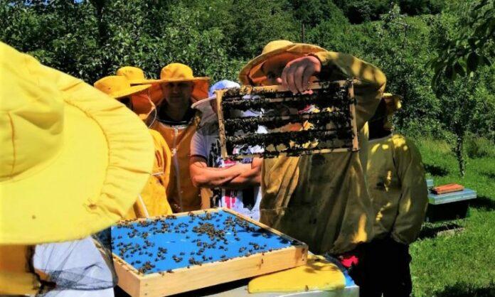 Danas je Svjetski dan pčela: Izgradite bolje za pčele!